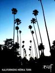 Kaliforniens mörka torn.png